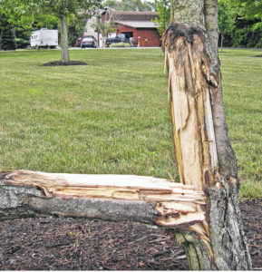 Winter can be hard on trees: Preventing ice damage