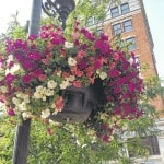 MSP beautifies downtown Portsmouth