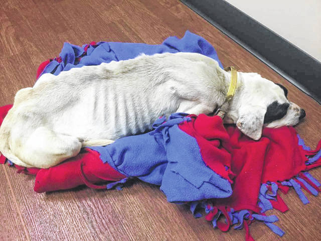 Ruby, who passed away in February 2017 despite extensive efforts by rescuers and veterinarians.